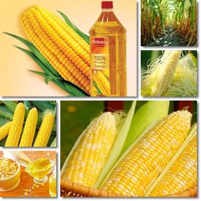 Proprietà e benefici Olio di semi di mais