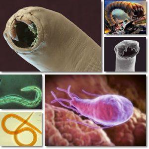Vermi e Parassiti: Cause, sintomi e cura