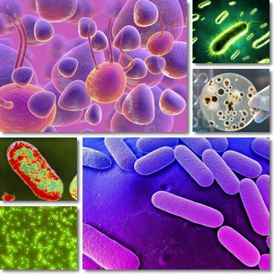 Globuli bianchi e macrofagi