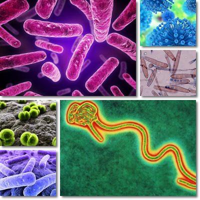 Differenza virus e batteri