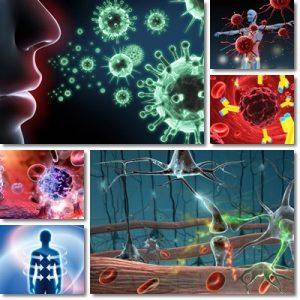 Vitamine e sistema immunitario