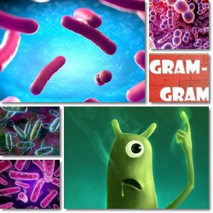 Differenza: Batteri gram positivi vs Gram negativi
