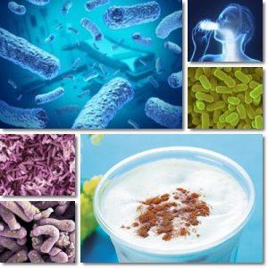 Proprietà e benefici Lactobacillus casei Shirota