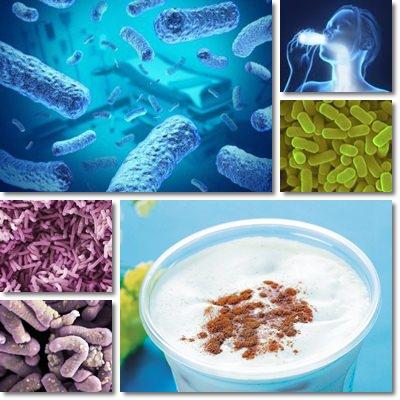 Lactobacillus casei Shirota