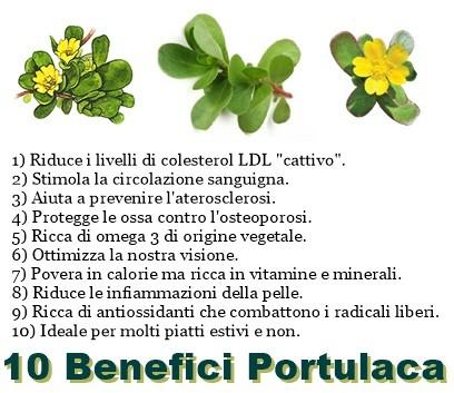 10 Benefici Portulaca Vitamine Proteine
