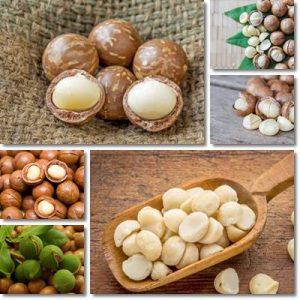 Proprietà e benefici Olio di Macadamia