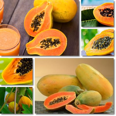 Proprietà e benefici Papaya Fermentata