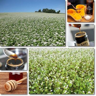Miele di grano saraceno