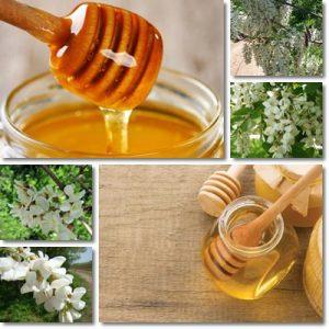 Proprietà e benefici Miele di Acacia