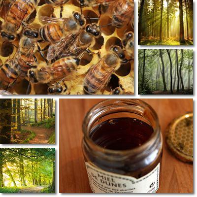 Miele di bosco