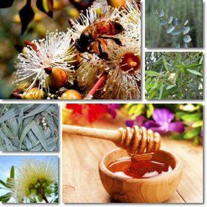 Proprietà e benefici Miele di Eucalipto