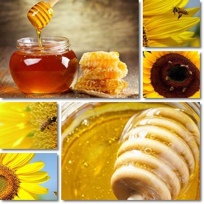 Proprietà e benefici Miele di Girasole