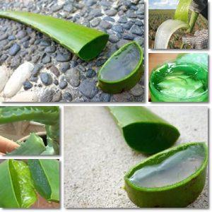 10 Benefici Succo di Aloe Vera