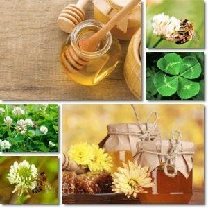 Proprietà e benefici Miele di Trifoglio