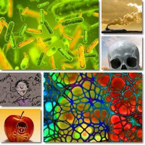 Come eliminare le tossine dal nostro Organismo