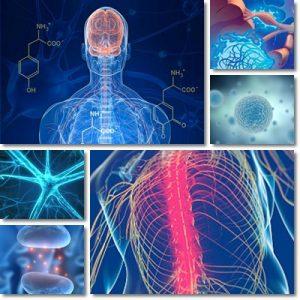 Sclerosi Multipla: Cause, Sintomi e Cura