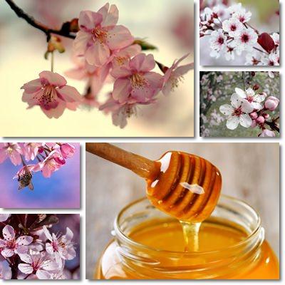 miele di ciliegio