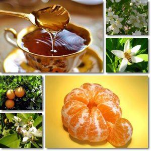 Proprietà e benefici Miele di Arancio