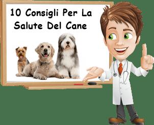 Come mantenere il cane in salute