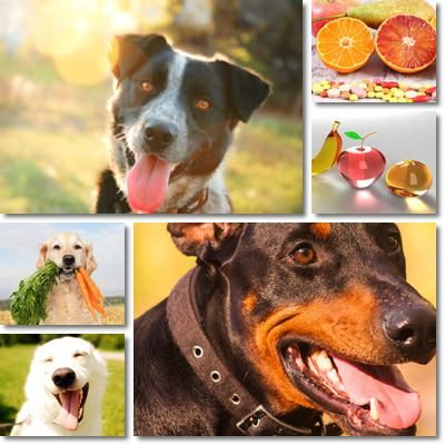 Vitamine per i nostri cani