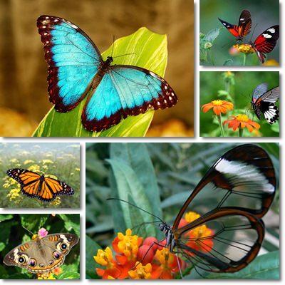 Come attirare farfalle