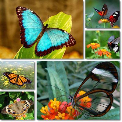 7 Consigli Per Attirare Farfalle Nel Giardino
