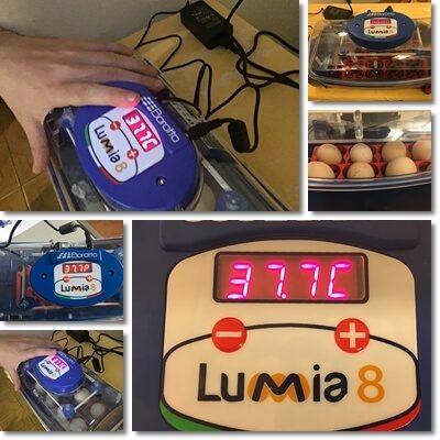 Incubatrice Lumia 8 Borotto