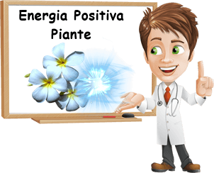 Piante che attirano energia positiva