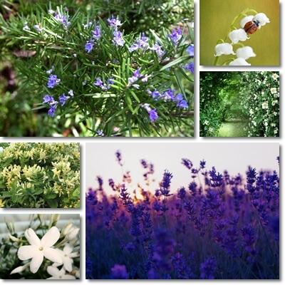 energia positiva piante