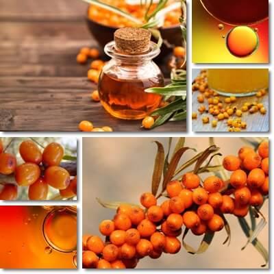 Proprietà e benefici Olio di Olivello Spinoso