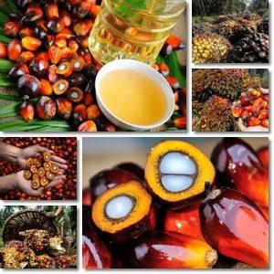 Proprietà e benefici Olio di Palma