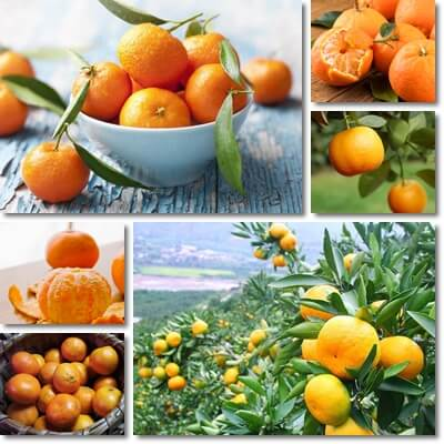 7 benefici mandarini