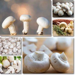 Proprietà e benefici Funghi Champignon