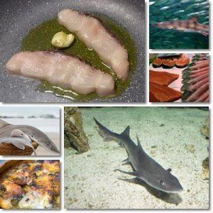 Proprietà e benefici Pesce Palombo