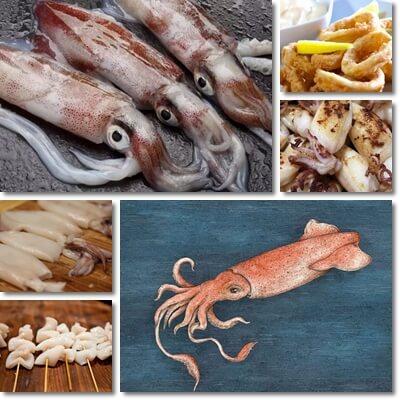 Proprietà e benefici Calamari