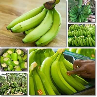 Banane verdi fanno bene o fanno male