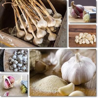 Controindicazioni ed effetti collaterali dell'aglio