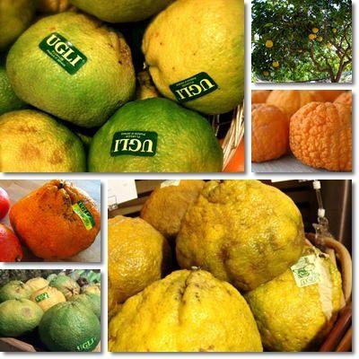 frutto ugli