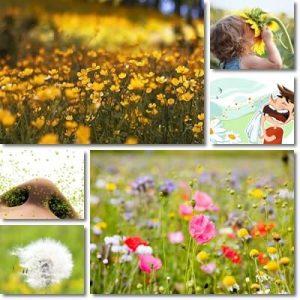 Febbre di Primavera e Febbre da Fieno: Cause e Sintomi
