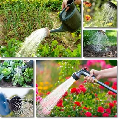 Orario per annaffiare le piante