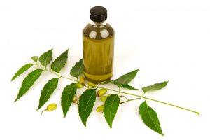 Recensione Olio di Neem: tutti i segreti di un olio versatile